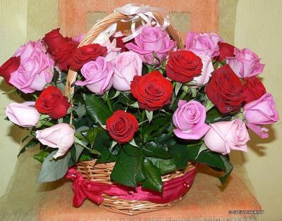 Поздравляем с Днем Рождения Наталью (Наталка) E7ac23fe101e17f4b5c40cea8496d8df