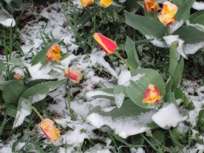 Фотоконкурс «Весна на ладошке». _a0d815d3def5882b5e76015ca29de1a8