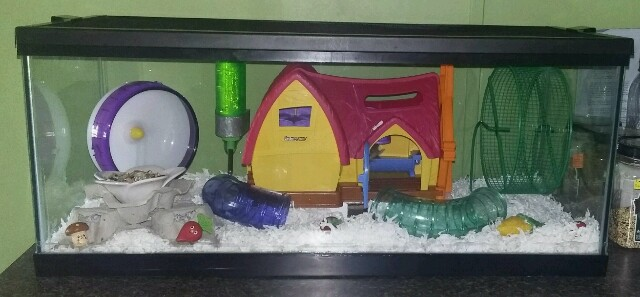 Another Cute Play House 20160723_112703-1-640x297