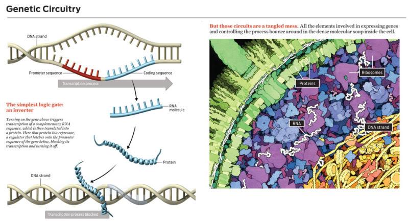 LA BIOLOGIE SYNTHETIQUE ET SES CONSEQUENCES FUNESTES ADN