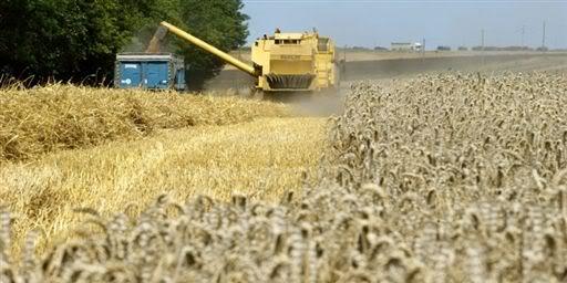 DEPOPULATION VIA LES OGM, LES PESTICIDES, LA DEFORESTATION ET LA POLLUTION DE NOTRE NOURRITURE ET DE NOS EAUX - Page 2 Agriculture-rcolte