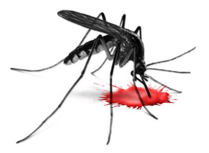 LES MODIFICATIONS GENETIQUES ET LEURS DANGERS  Mosquito-blood