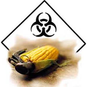 DEPOPULATION VIA LES OGM, LES PESTICIDES, LA DEFORESTATION ET LA POLLUTION DE NOTRE NOURRITURE ET DE NOS EAUX - Page 2 OGM_grenade_biohazard-1