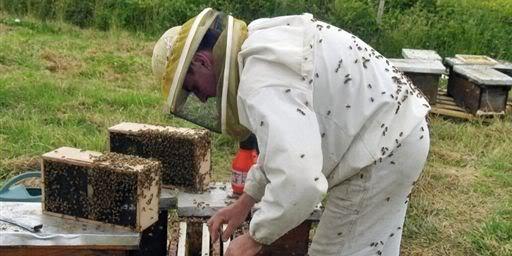 DEPOPULATION VIA LES OGM, LES PESTICIDES, LA DEFORESTATION ET LA POLLUTION DE NOTRE NOURRITURE ET DE NOS EAUX Apiculteur