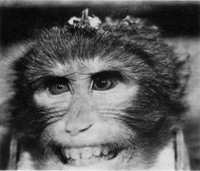 2010 : PUCES IMPLANTABLES, RFID, NANOTECHNOLOGIES, NEUROSCIENCES, N.B.I.C. ET CYBERNETIQUE - Page 4 Brainchipped-monkey