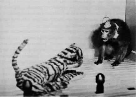 2010 : PUCES IMPLANTABLES, RFID, NANOTECHNOLOGIES, NEUROSCIENCES, N.B.I.C. ET CYBERNETIQUE - Page 4 Brainchipped-monkey2
