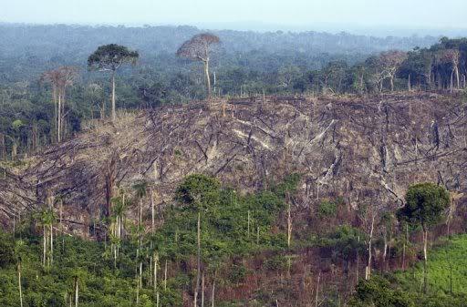 DEPOPULATION VIA LES OGM, LES PESTICIDES, LA DEFORESTATION ET LA POLLUTION DE NOTRE NOURRITURE ET DE NOS EAUX - Page 2 Dforestation