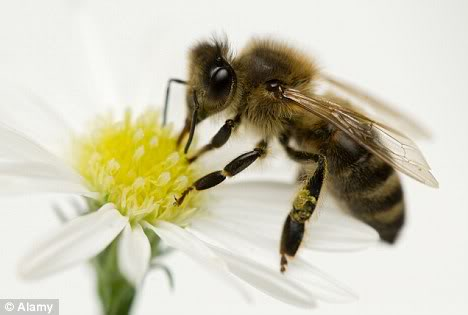DEPOPULATION VIA LES OGM, LES PESTICIDES, LA DEFORESTATION ET LA POLLUTION DE NOTRE NOURRITURE ET DE NOS EAUX Honeybee