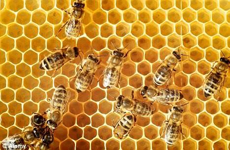 DEPOPULATION VIA LES OGM, LES PESTICIDES, LA DEFORESTATION ET LA POLLUTION DE NOTRE NOURRITURE ET DE NOS EAUX Honeybees_hive