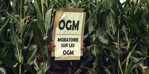 DEPOPULATION VIA LES OGM, LES PESTICIDES, LA DEFORESTATION ET LA POLLUTION DE NOTRE NOURRITURE ET DE NOS EAUX - Page 3 OGM_moratoire