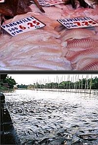 DEPOPULATION VIA LES OGM, LES PESTICIDES, LA DEFORESTATION ET LA POLLUTION DE NOTRE NOURRITURE ET DE NOS EAUX - Page 2 Panga