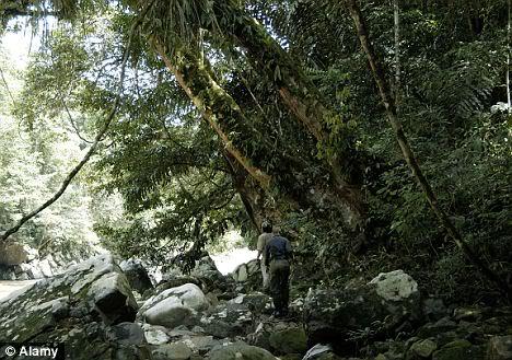 LES MODIFICATIONS GENETIQUES ET LEURS DANGERS  Malaysianforest