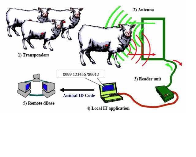 2010 : PUCES IMPLANTABLES, RFID, NANOTECHNOLOGIES, NEUROSCIENCES, N.B.I.C. ET CYBERNETIQUE - Page 4 Moutonspucs