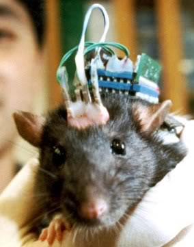 2011 : PUCES IMPLANTABLES, RFID, NANOTECHNOLOGIES, NEUROSCIENCES, N.B.I.C. ET CYBERNETIQUE ! Rat_brain_implant