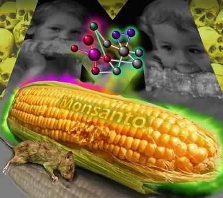 DEPOPULATION VIA LES OGM, LES PESTICIDES, LA DEFORESTATION ET LA POLLUTION DE NOTRE NOURRITURE ET DE NOS EAUX Sep09monsanto07