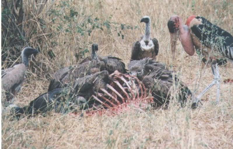FASCISME, DICTATURE, ETAT-POLICIER, TERRORISME D'ETAT - Page 2 Vulture7