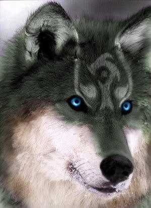Twilight RPG registration SilverWhiteWolf