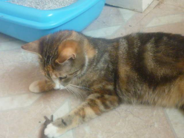 Bliss, 10 month tabby girl Colwick4