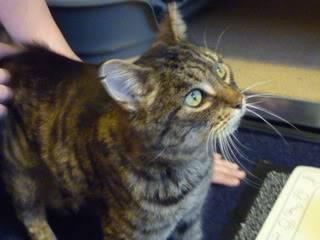 Ella, spcial female cat needing home, Nottingham El3