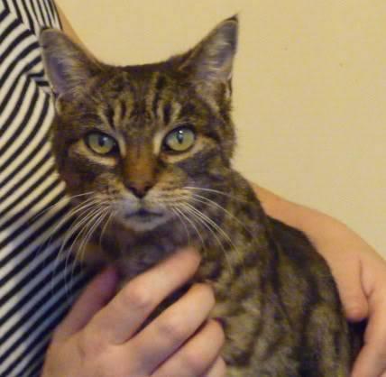 Ella, spcial female cat needing home, Nottingham El8