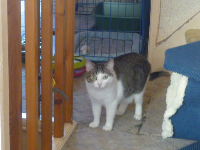 2 BEAUTIFUL CATS Tb3