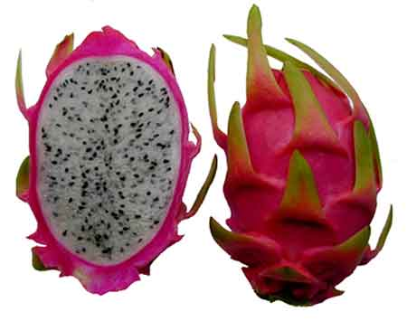 Photos of not-so-common foods fed -- Fun Fruits and Vegetables DragonFruit_zps842c1b70