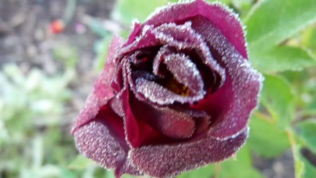 floraisons d'octobre 4octobre10002