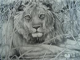 Color Contest Lion