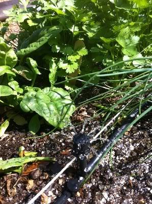 Drip Irrigation A654207a
