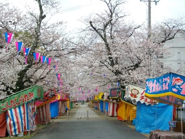 Festivalul florilor de cires -Sakura hanami IMGP0512