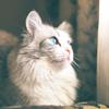 ~LunarSky Camp~ A `Cat/Wolf RP 34j4r9s