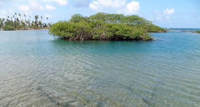 Taller de Encargos Oficial: Planetas [Pide aquí tu planeta] - Página 4 Los-manglares-mexicanos_zpsa264db0d
