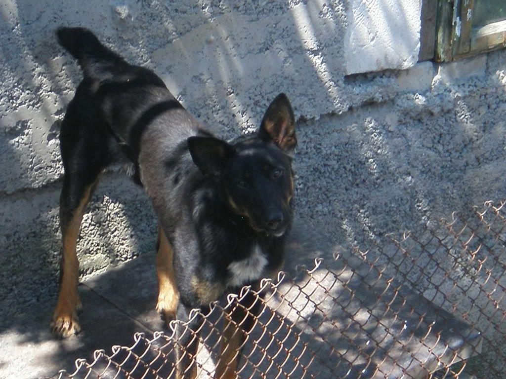 Fotografii cu animalutele voastre P6190028