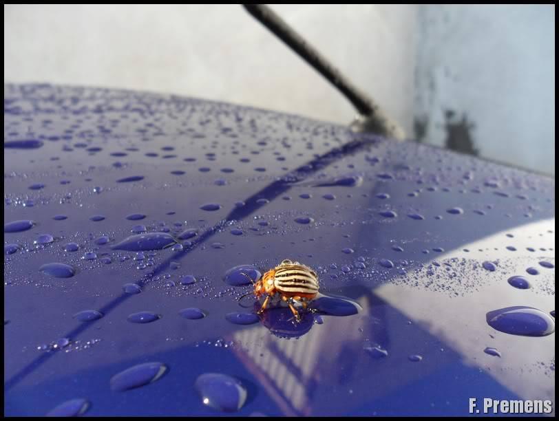 Detallado Exterior Ford Focus RS MK I SAM_1106