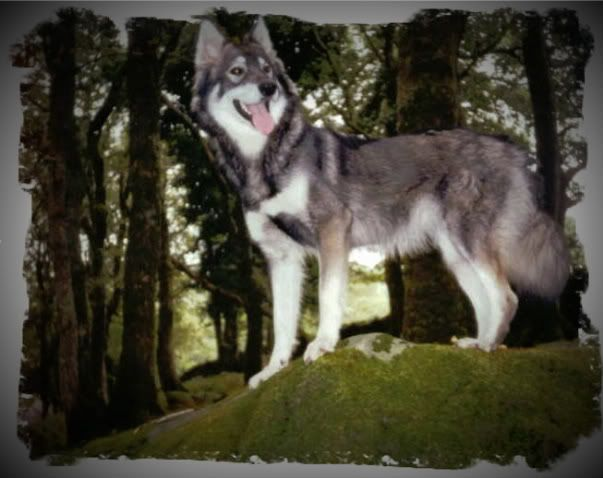 Ute show dog types and  Elkaggrandaughter-1-1-1