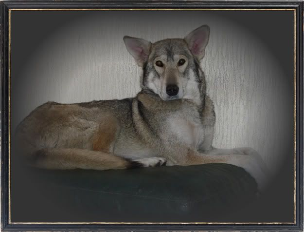 Ute show dog types and  Latestpups001-1-1
