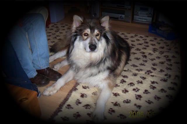 Ute show dog types and  SulinTala3-1