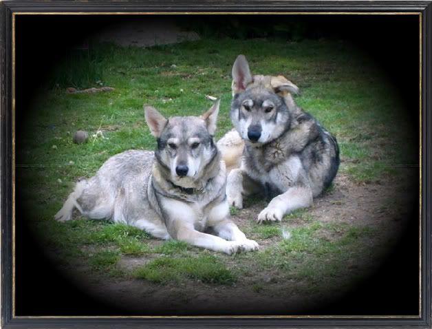Ute show dog types and  Waynesbbq004-1-1-1