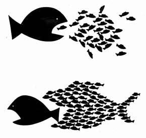 Una guía de compatibilidad entre peces Pecescomida_zps3675497d