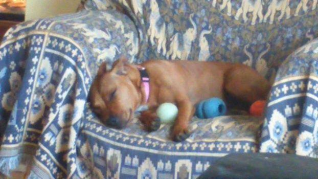 Tallulah Diary  SleepingmissLula_zps1cad606a