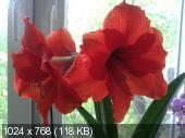 """Фотоконкурс """"Красный"""" B26d4e1d1f2b3712a7328302fb156443"""