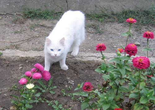 "Фотоконкурс ""Кошки на картошке"" 2305e3c6000ef76a9294f3da20210ee6"