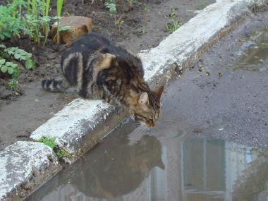"""Фотоконкурс """"Кошки на картошке"""" B607809e9a14b64567ff94be68c14eb0"""