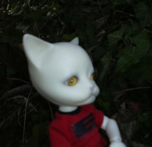 Les BJD de chaton : nouveau venu en P5 et sa petite story ^^ DSCN0221