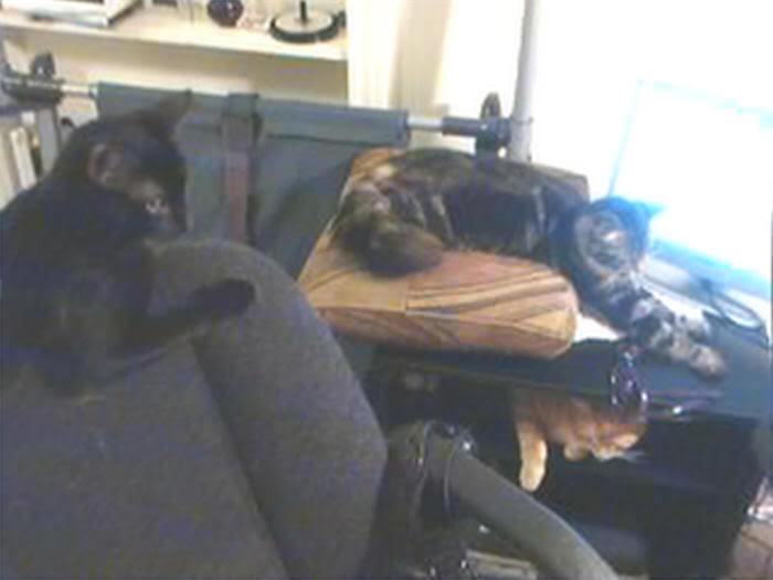 My Cats Thread with 50% Cotton & Kitten - Page 2 Catsandmonitor