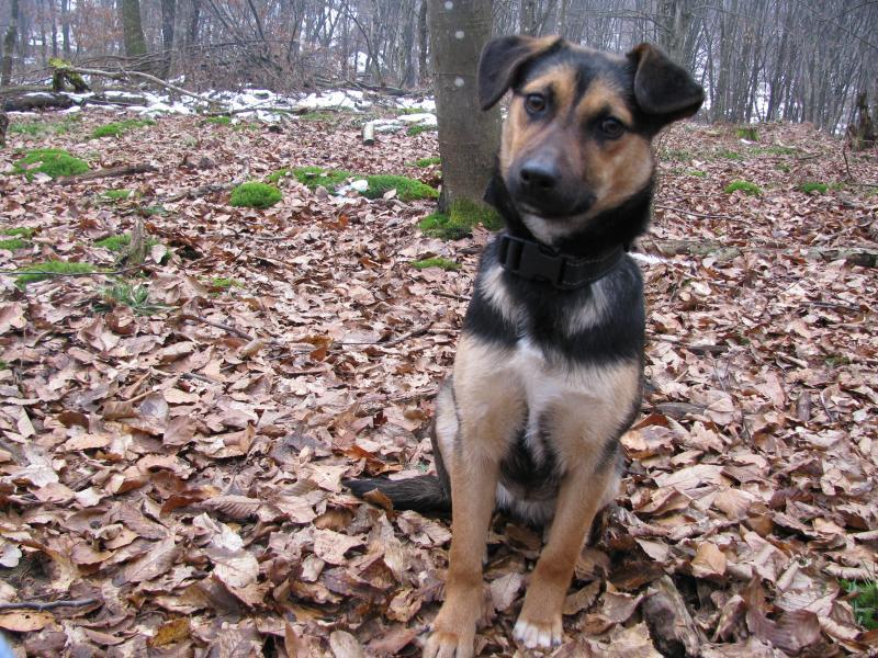 Akcija udomljavanja psa: Vrana - rođena za akciju IMG_1461_zpsdaae7e0e