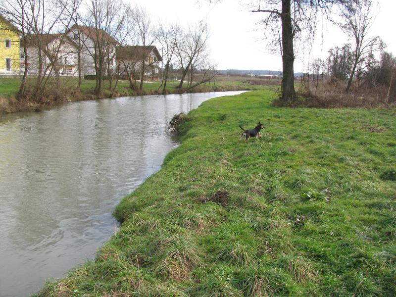 Akcija udomljavanja psa: Vrana - rođena za akciju IMG_1518_zps5a2265b1