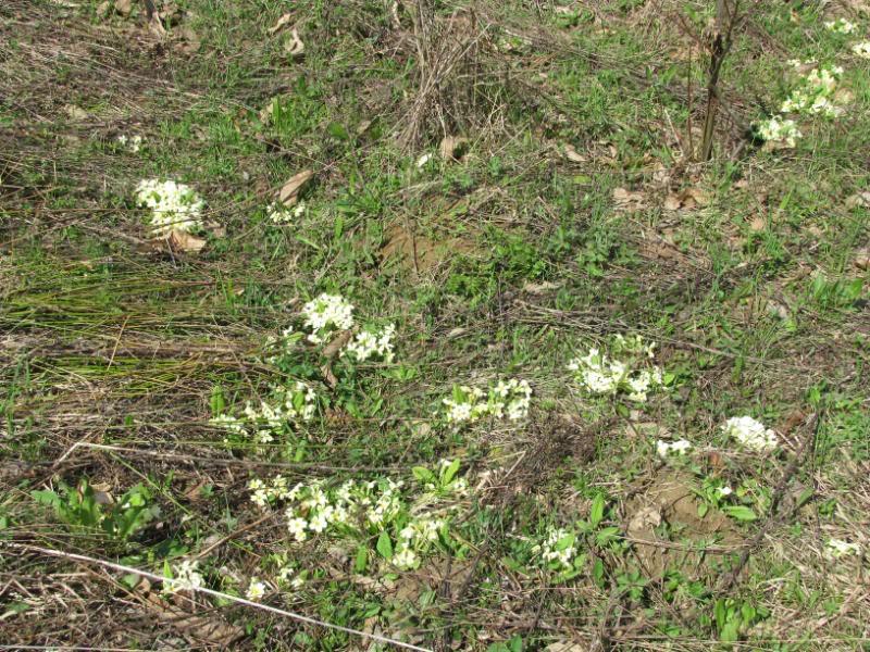 Dobro iskorišten proljetni dan-Petrinja IMG_2566