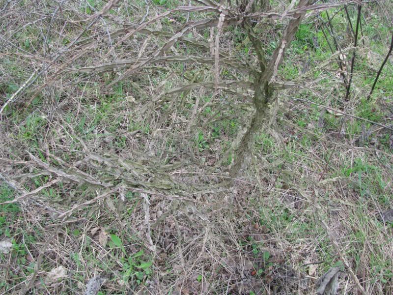 Dobro iskorišten proljetni dan-Petrinja IMG_2572