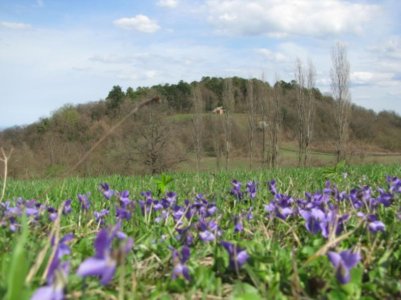 Dobro iskorišten proljetni dan-Petrinja IMG_2579
